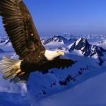 Necesitamos Más Águilas...